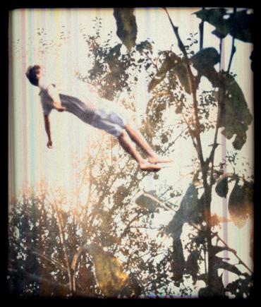 FallingTrees12